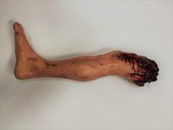Severed Leg R/H